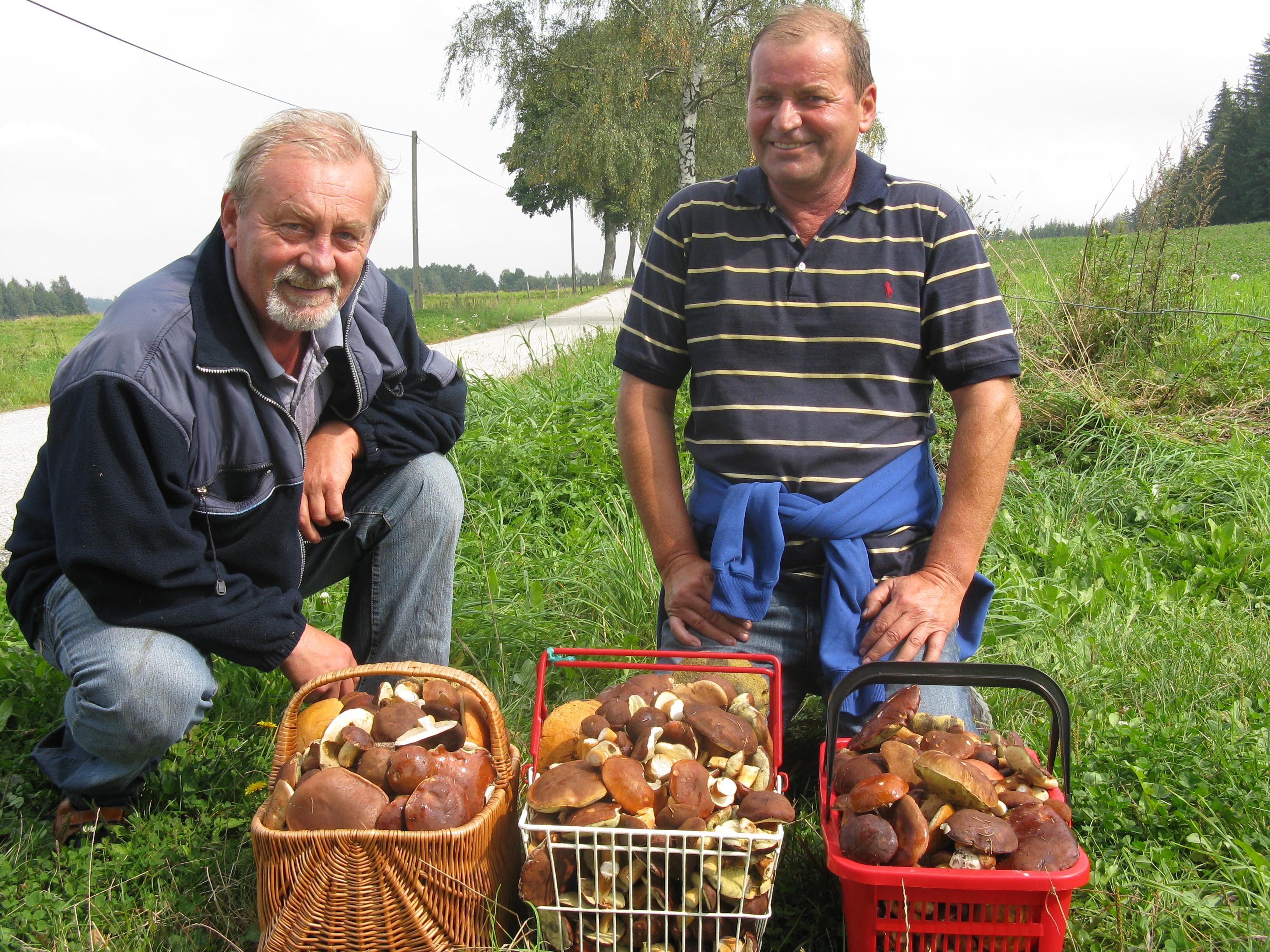 Czech Republic mushrooms